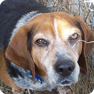 Novi Mi Beagle Meet Copper A Dog For Adoption Http Www Adoptapet Com Pet 10519707 Novi Michigan Beagle Dog Adoption Adoptable Beagle Pets