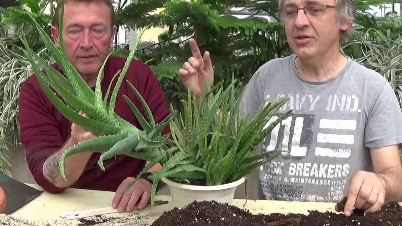 chaine tv de jardinage: arrosage:comment faire la culture et