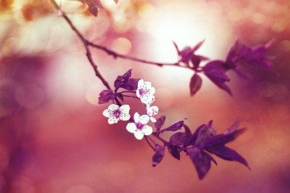 Photography Fine Art Flower Print Botanical by VanBurensHomeDecor, $15.00
