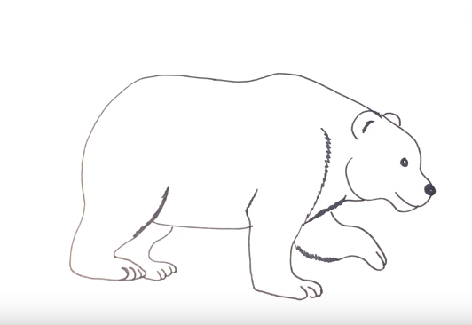 How To Draw A Polar Bear Easy Step By Step With This How To Video And Step By Step Drawing Instructions E Easy Animal Drawings Polar Bear Drawing Easy Animals