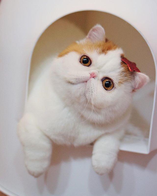 CyBeRGaTa - Cats, Memes, New Mexico — snoopybabe