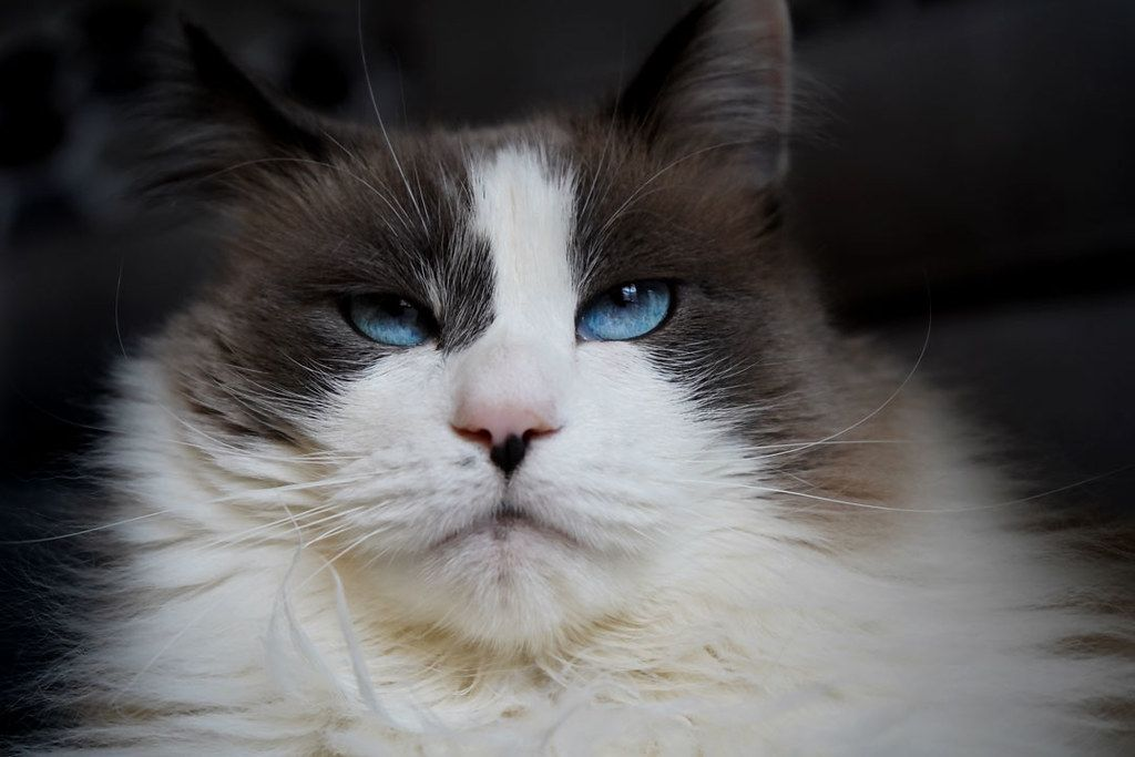 Grumpy Tired Cat Watching Birds Fly Pounce Stayhome Cat Shots Cats Animals