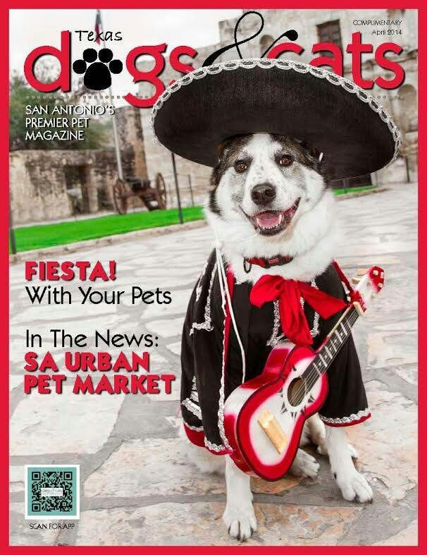 This Pup Is Ready For Fiesta And For A Serenade San Antonio