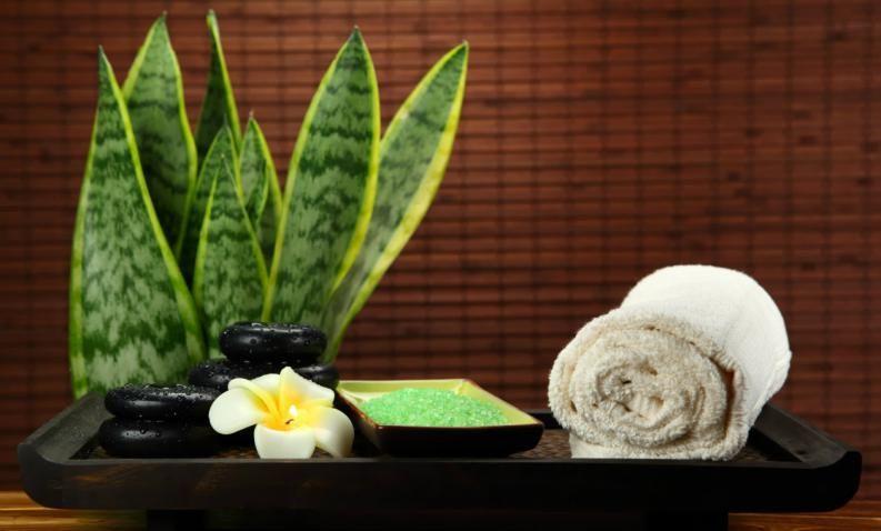 Las mejores plantas para el baño según el Feng Shui | El feng shui ...