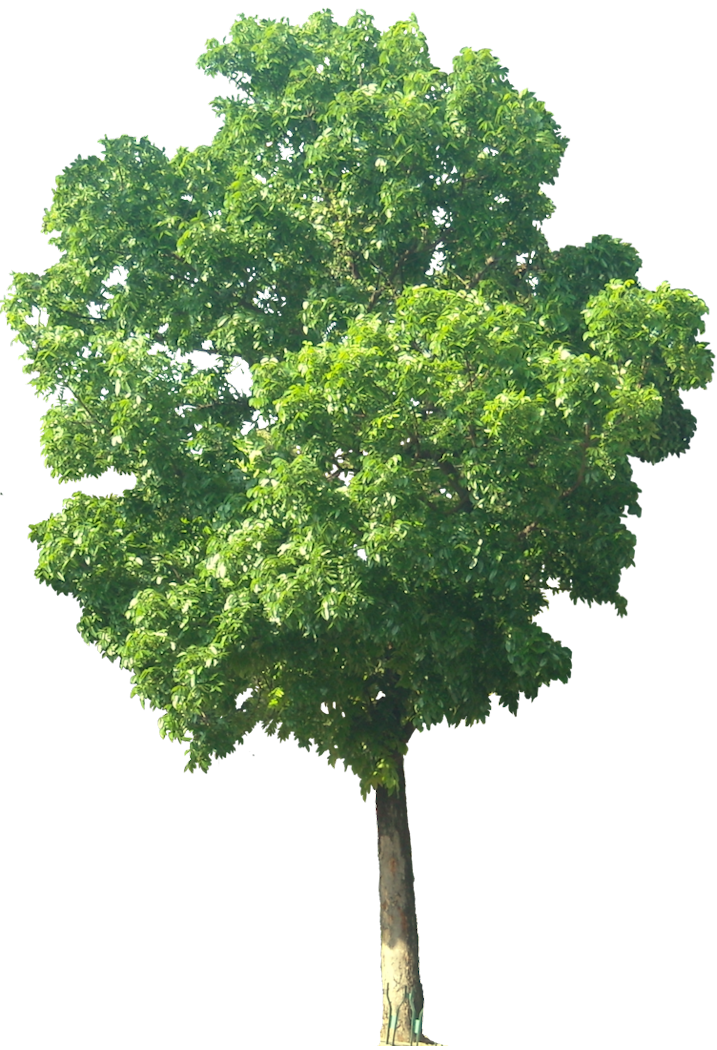 Tree free vector download (5,308 Free vector) for ...