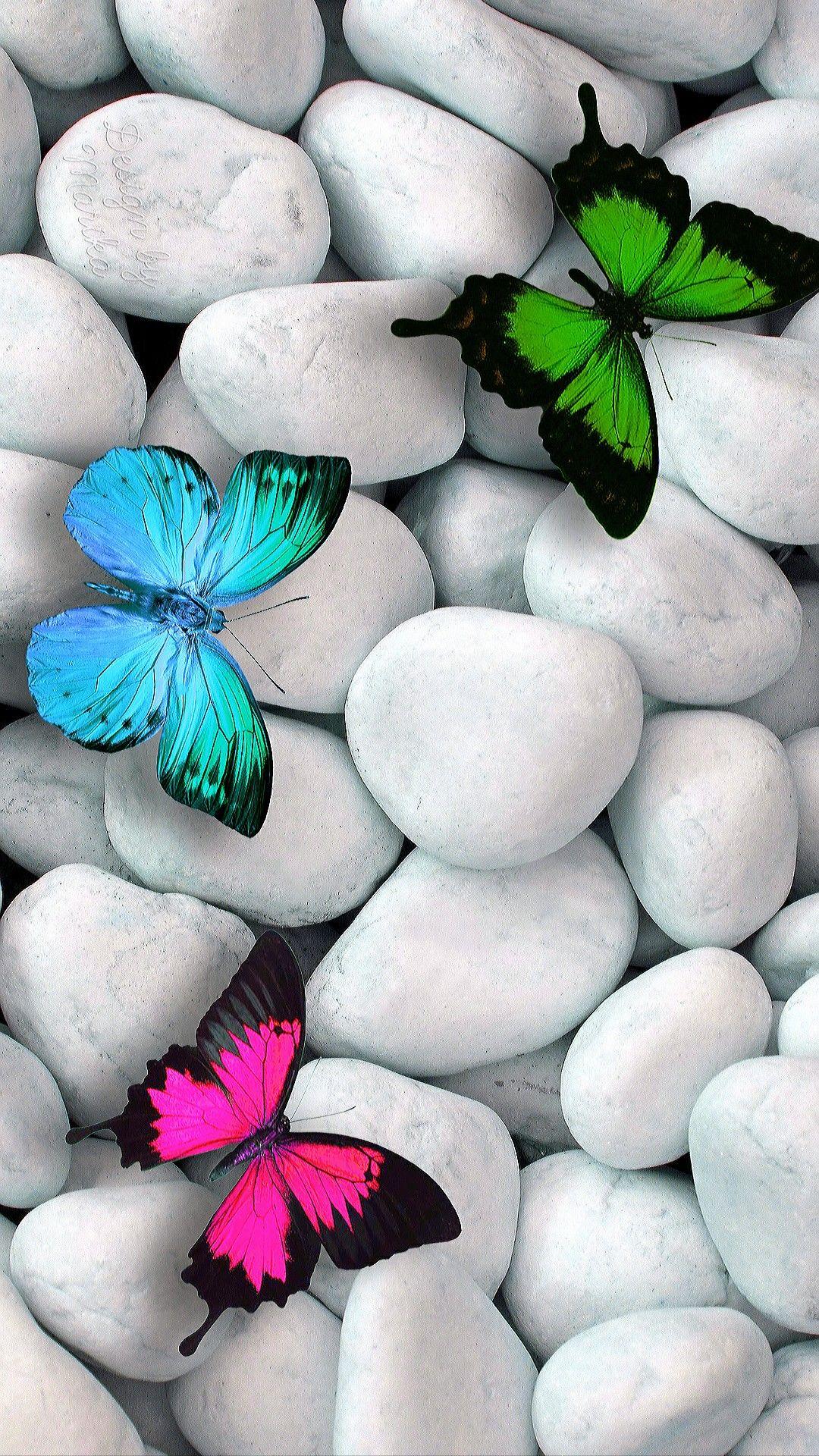 Three Butterflies On White Stones Pretty Wallpapers Butterfly Wallpaper Pretty Wallpaper Iphone