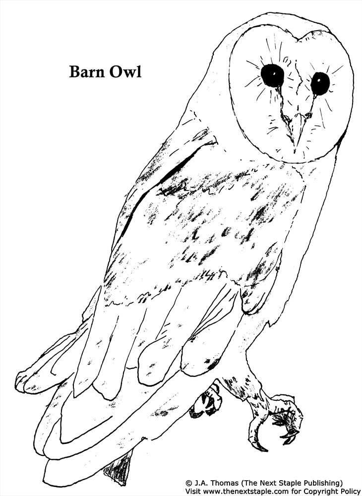 Barn Owl Coloring Pages 4 Free Printable Coloring Pages In 2020
