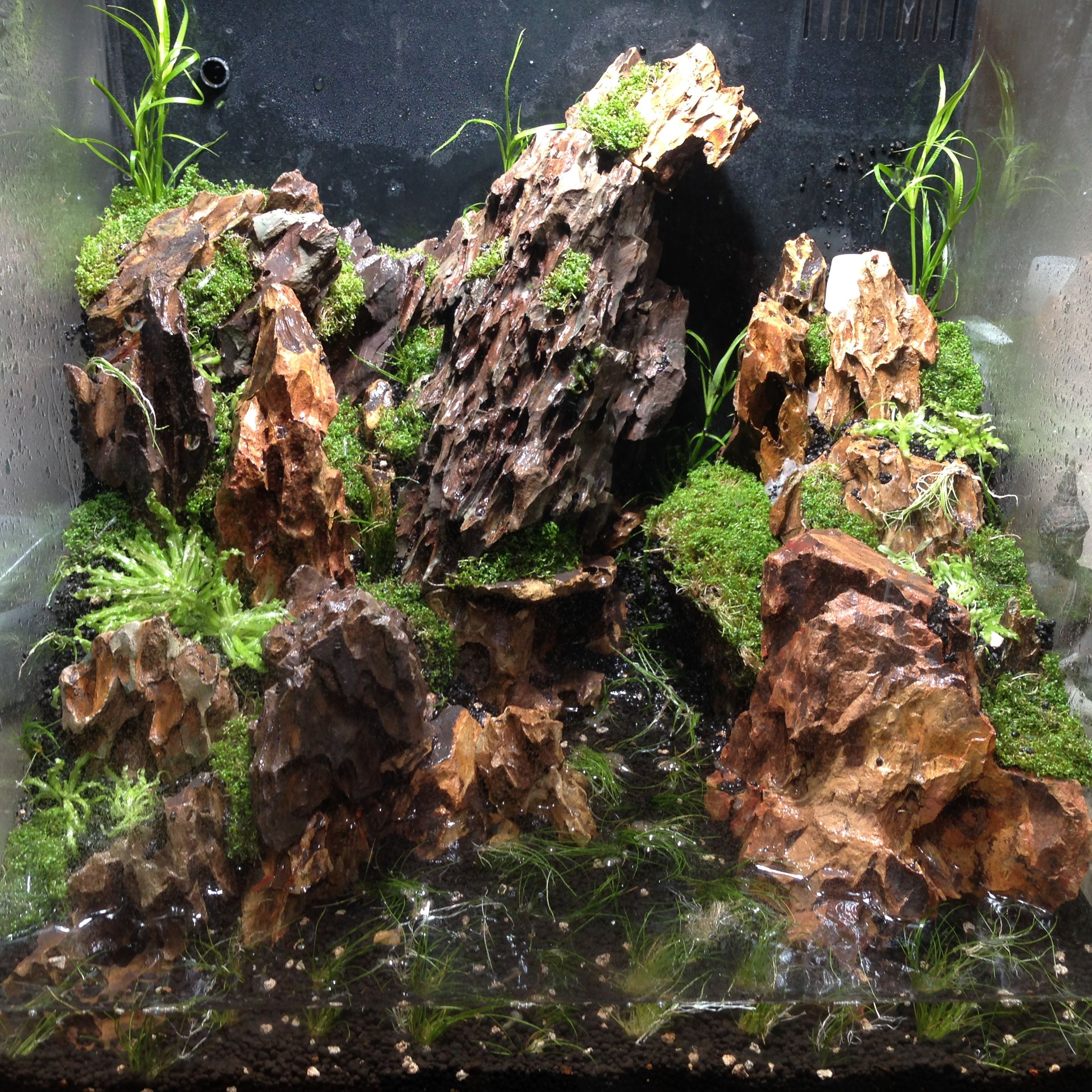 Pin by Arianne Morin on Trucs pour aquariums