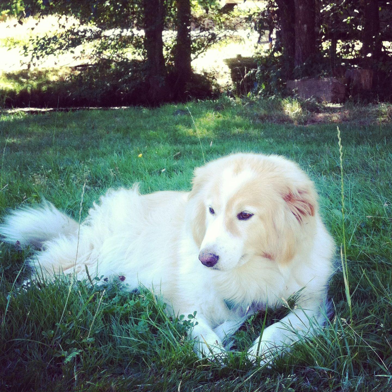 My beautiful girl Cleo! Follow me on Instagram! daniellesmith7