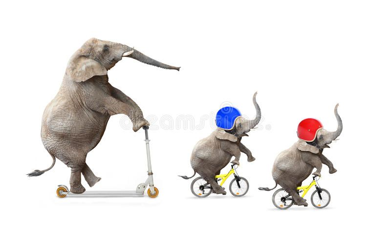 Funny Riders Funny Elephant S Family Bicycling Road Safety