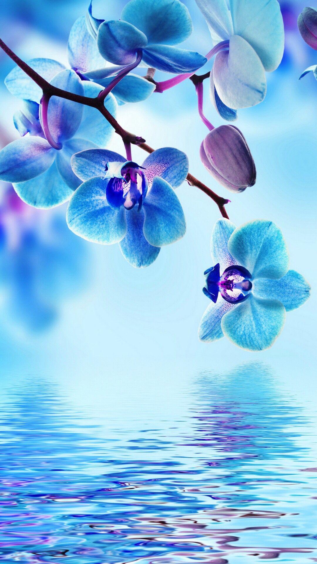 Blue Water Wallpaper Beautiful Wallpapers Backgrounds Orchid Wallpaper Beautiful Flowers Wallpapers