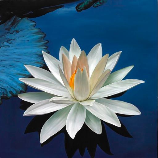 Pin by martin psialer on flowers lotus pinterest gardens lotus mightylinksfo