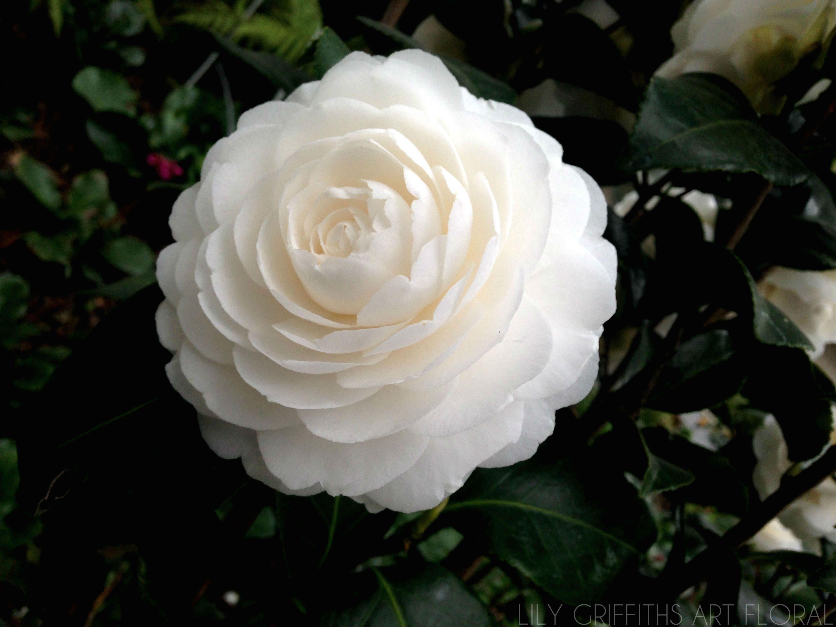 les fleurs en hiver lily griffiths art floral paris. Black Bedroom Furniture Sets. Home Design Ideas
