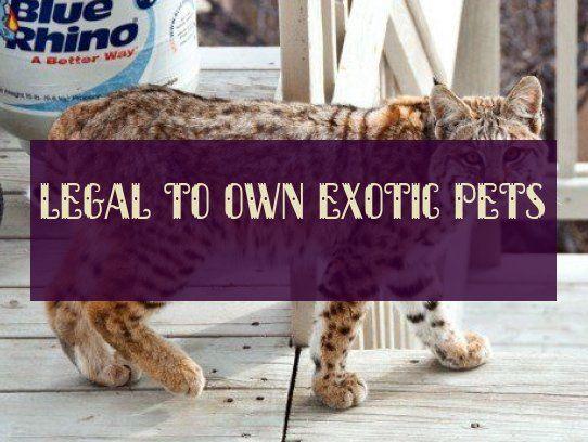 Legal To Own Exotic Pets Legal Exotische Haustiere Zu Besitzen