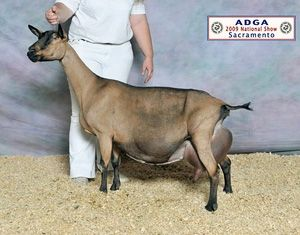 There are 6 major dairy goat breeds in the US  Our herd