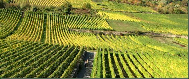 Rudesheim Vineyards