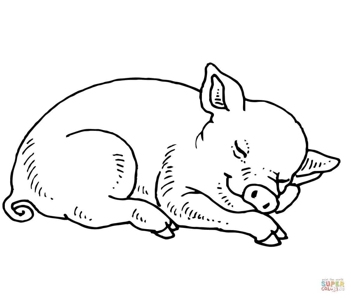Pig Coloring Pages Pig Coloring Pages Free Coloring Pages