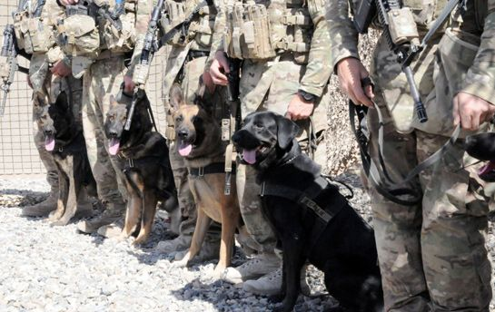 Military Service Dogs Military Service Dogs Military Dogs Military Working Dogs