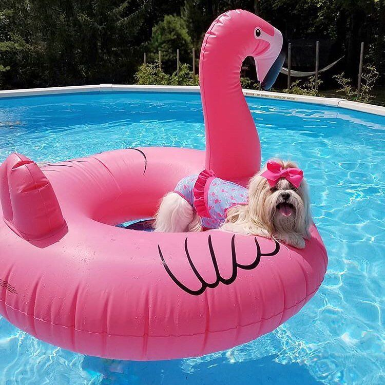 Bei Dem Wetter Jagt Man Doch Keinen Hund Vor Die Tur Folge Uns Auch Bei Instagram Und Finde Erfrischende Inspir Hotel Am Strand Poolpartys Pool Spielzeug