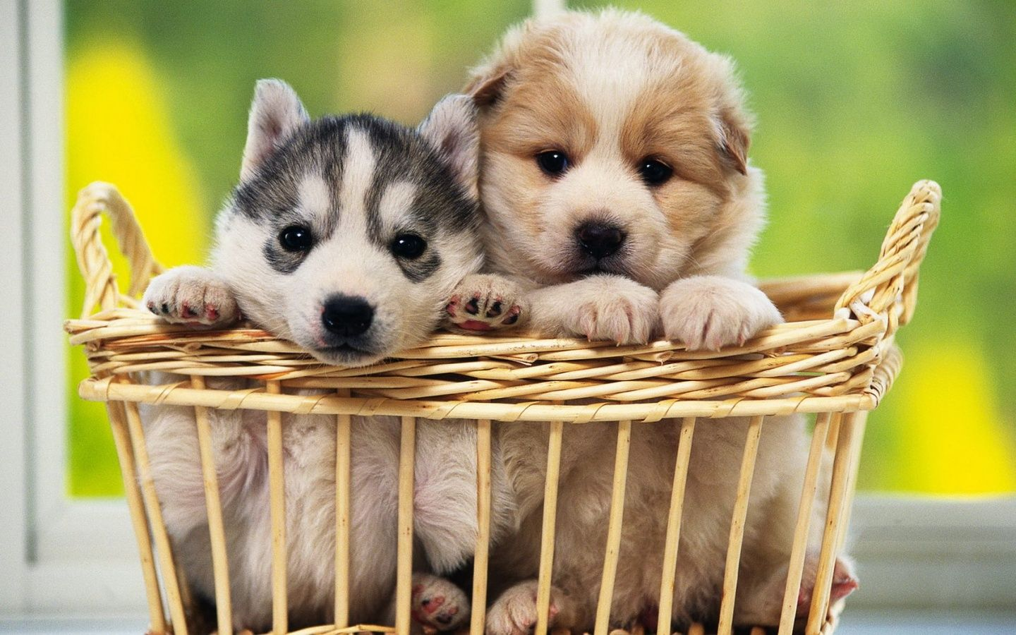 Cute Dogs Hd Wallpapers Free Download Cute Dogs Wallpapers For
