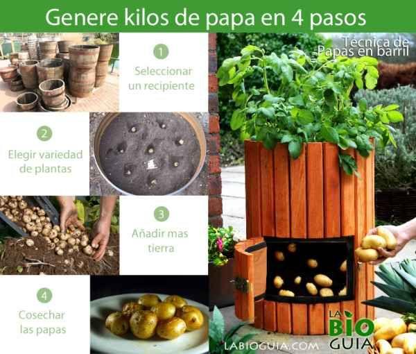 Cómo producir kilos de papa en 4 pasos #patiodepapas