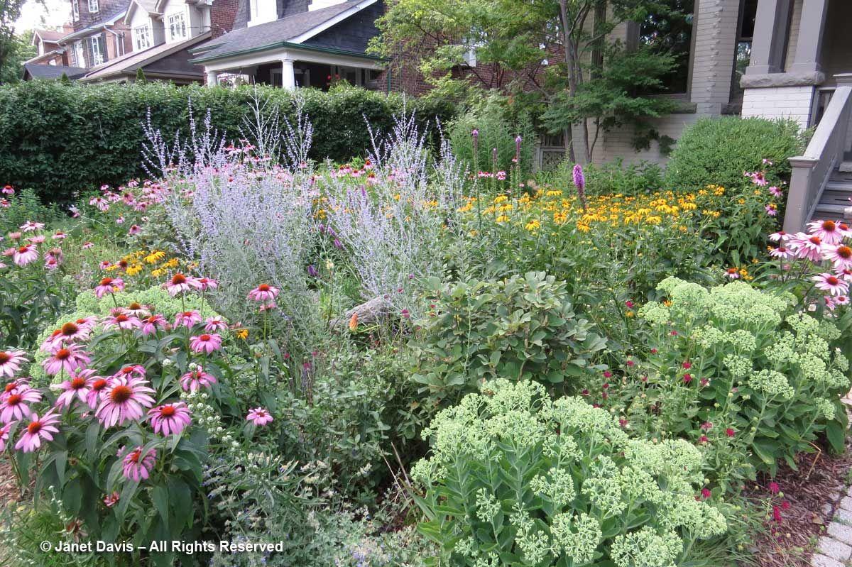 Image Result For Front Yard Pollinator Garden Pollinator 400 x 300