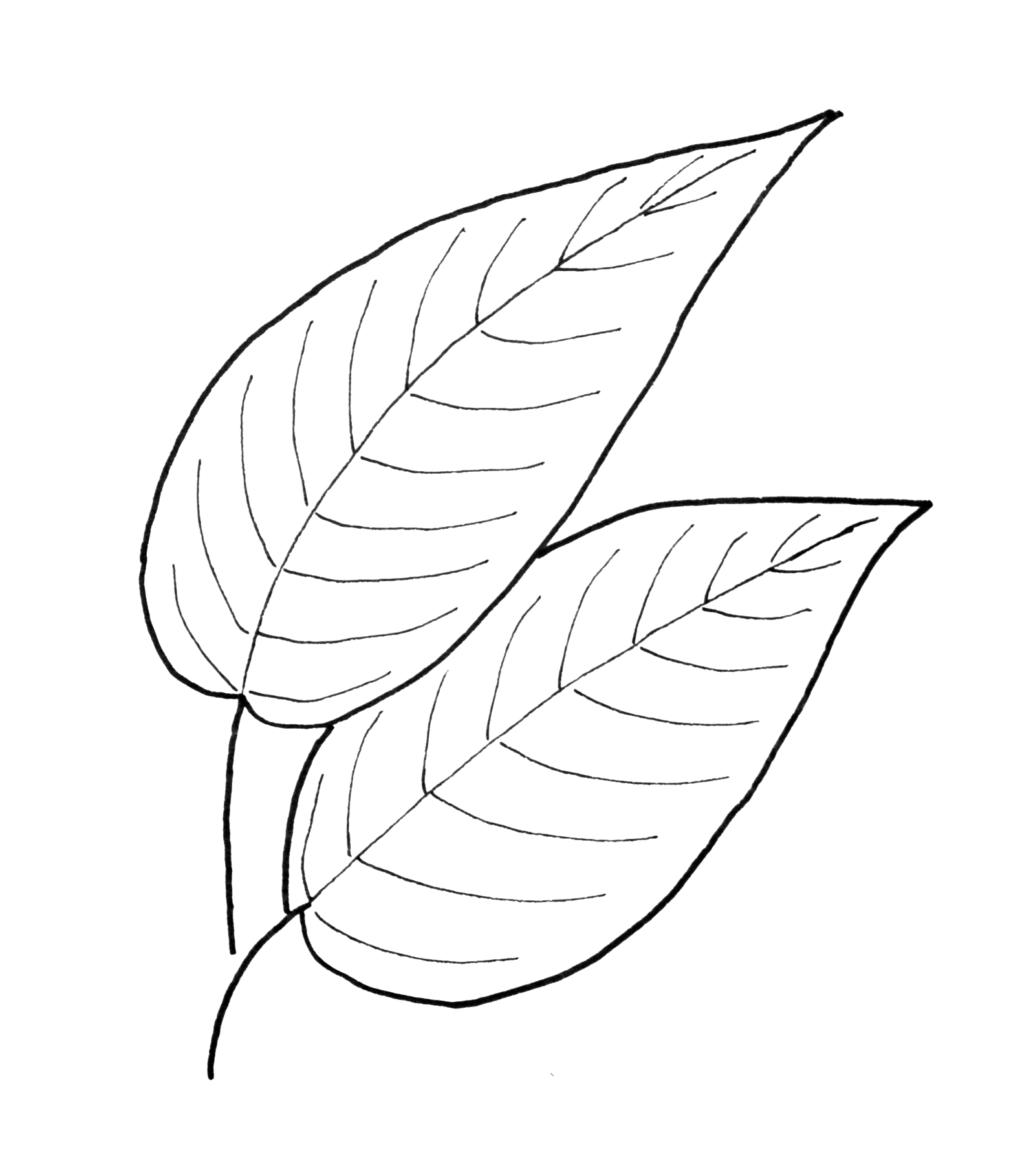 Fall Leaf Pattern Printables