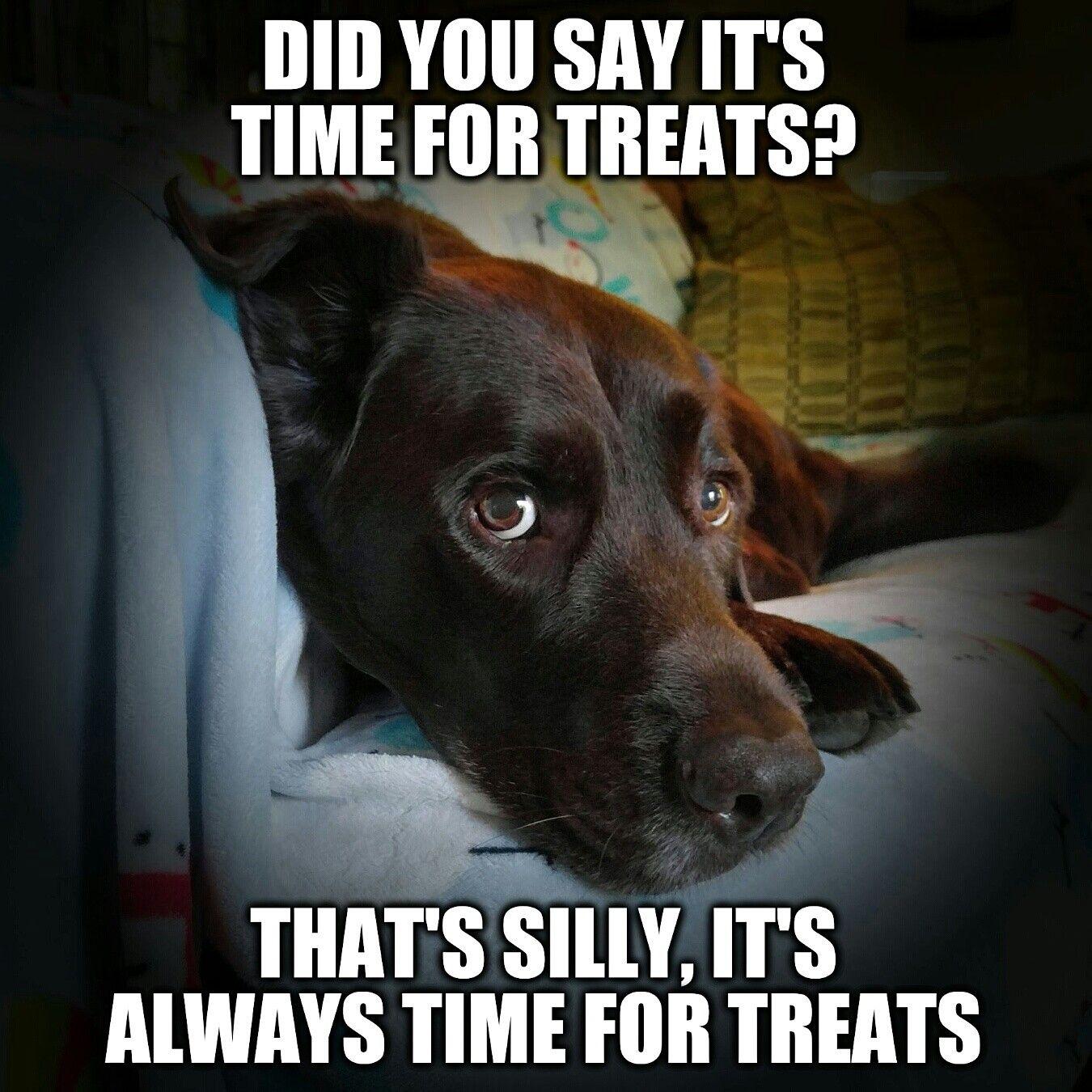 Labrador Retriever - Intelligent and Fun Loving | Labs, Chocolate ...