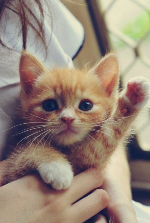The only cat I'd ever want is an orange one, and preferably one that would stay this little forever. This is adorable.