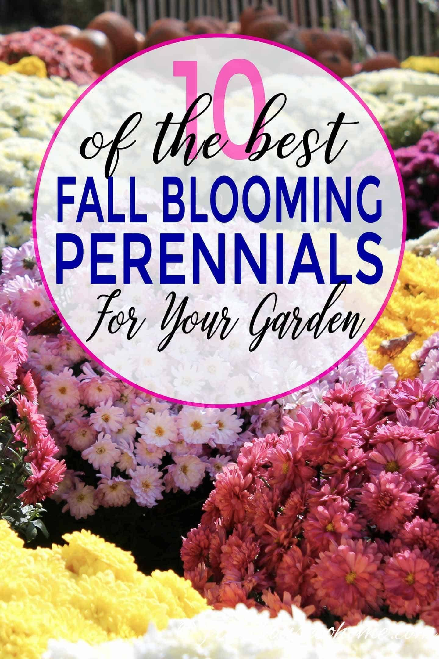 Terrific Photo fall Flower Garden Thoughts An easy guide for flower gardening for beginners. Learn