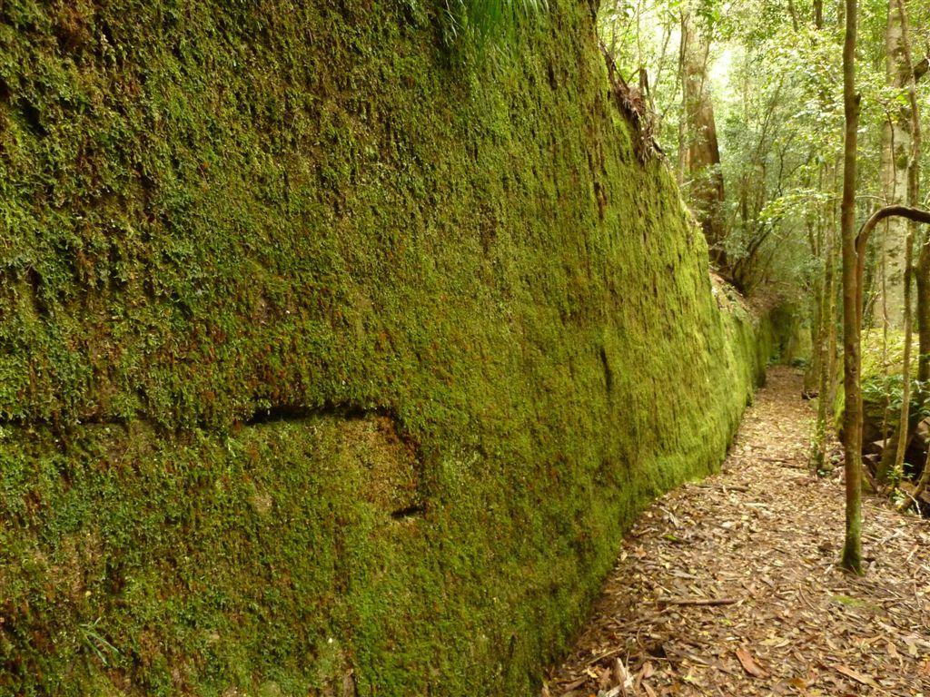 Pin by Larkin Moneyhun on outdoor garden | Pinterest | Moss wall ...