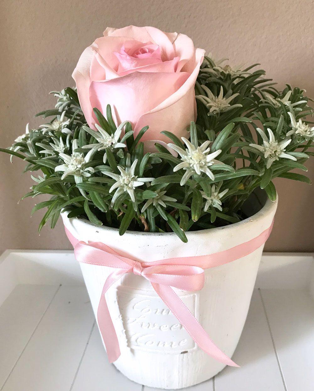 Geschenk Idee Alpen Edelweiss Blumenliebe Pinterest Edelweiss