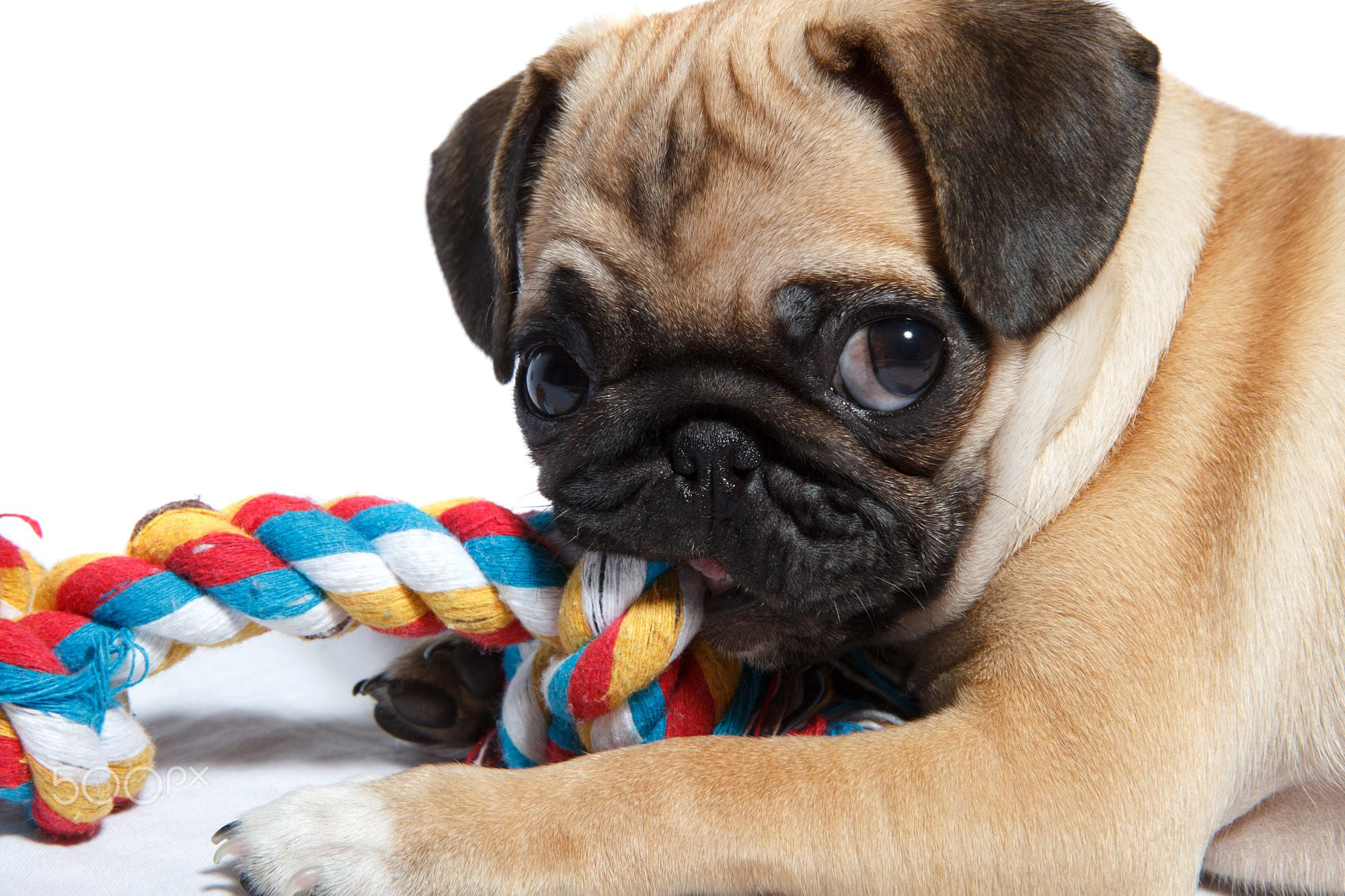 Pin By Hanna Bryson On Pugs Best Dog Toys Puppy Teething