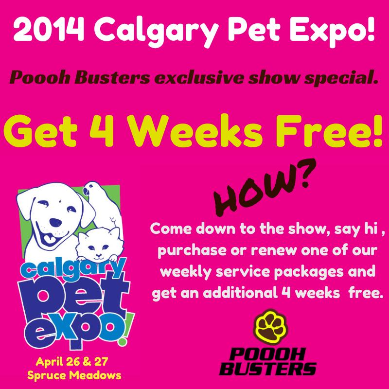 Poooh Busters Team On Say Hi Pets Calgary