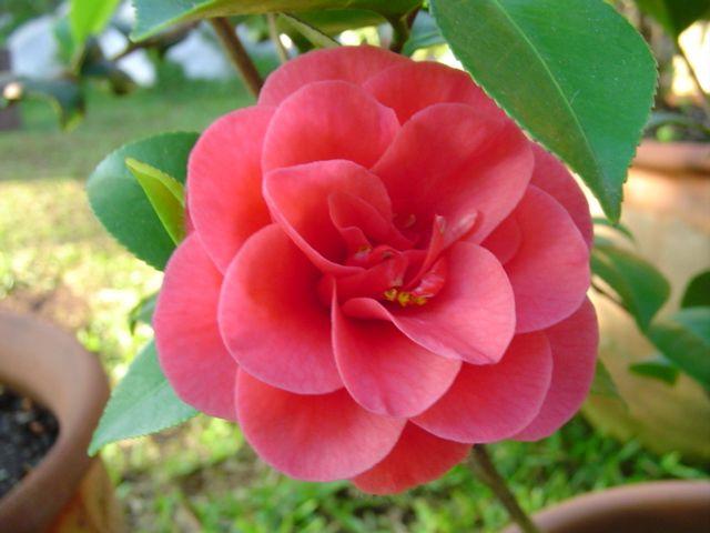 Las Flores Mas Hermosas Del Mundo Imagenes Imagui Jardin