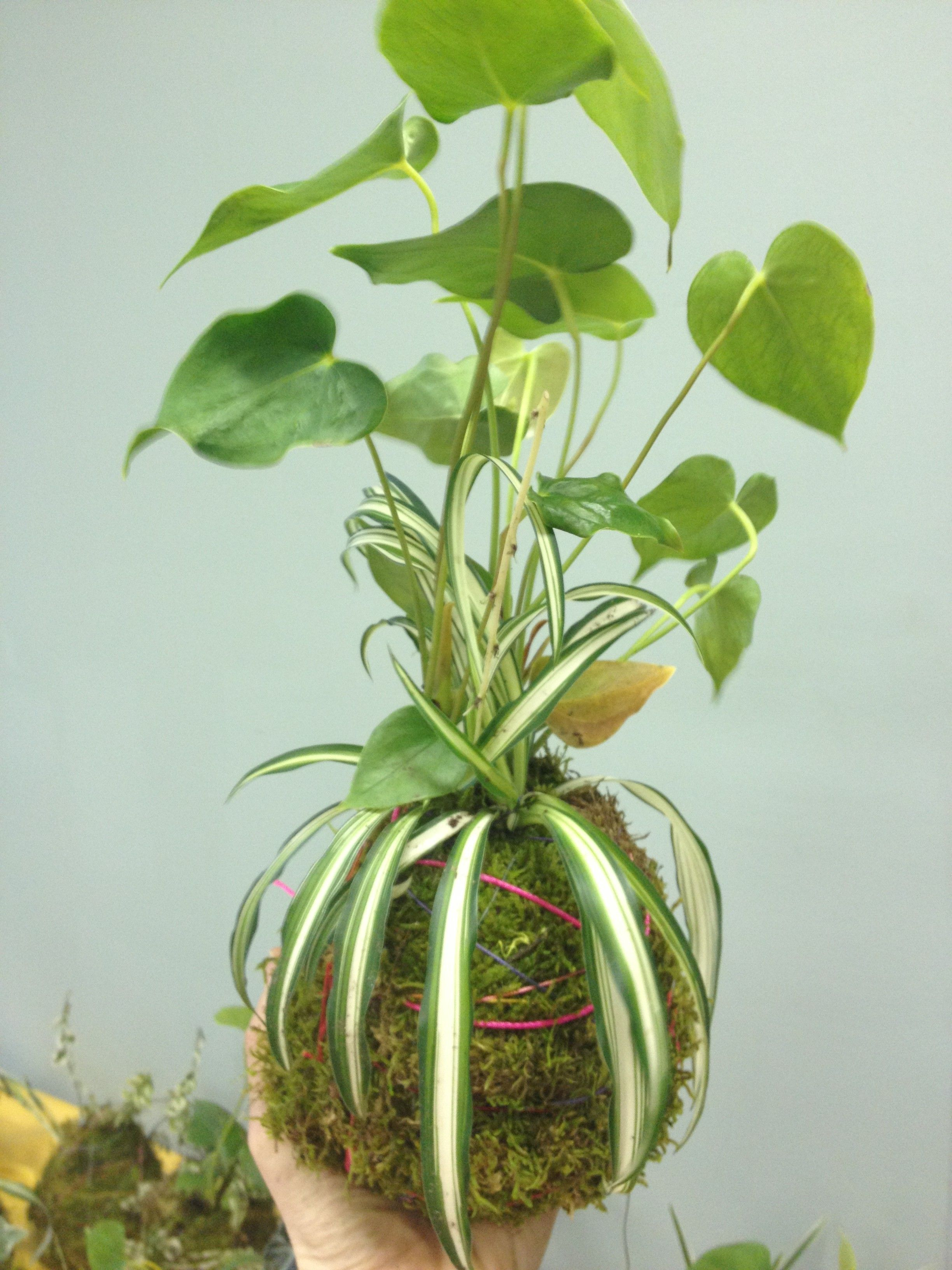 Unique Kokedama Ball Ideas For Hanging Garden Plants Selber Machen