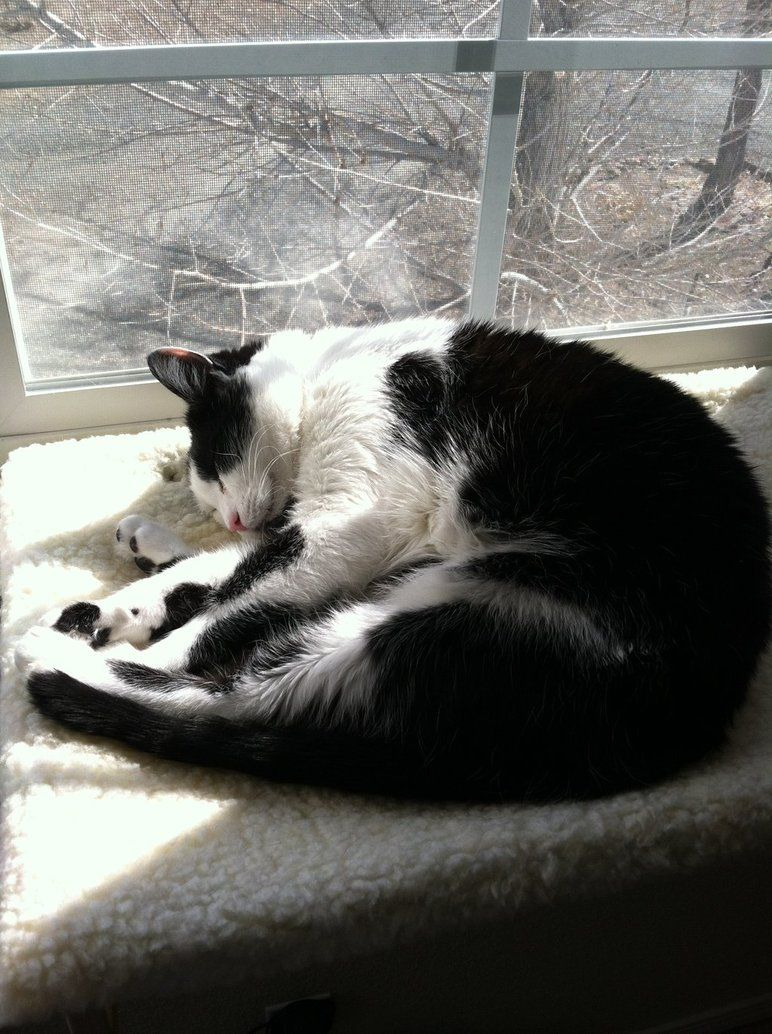 Window bed for cats  sleeping peacefully by jamjams  colorful love ii  pinterest