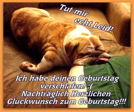 Birthday Hund Englisch Bulldogge Tragen Alles Gute Zum