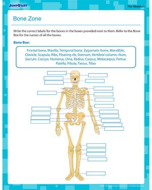 Bone Zone Know More About Bones With Our Free 5th Grade Science