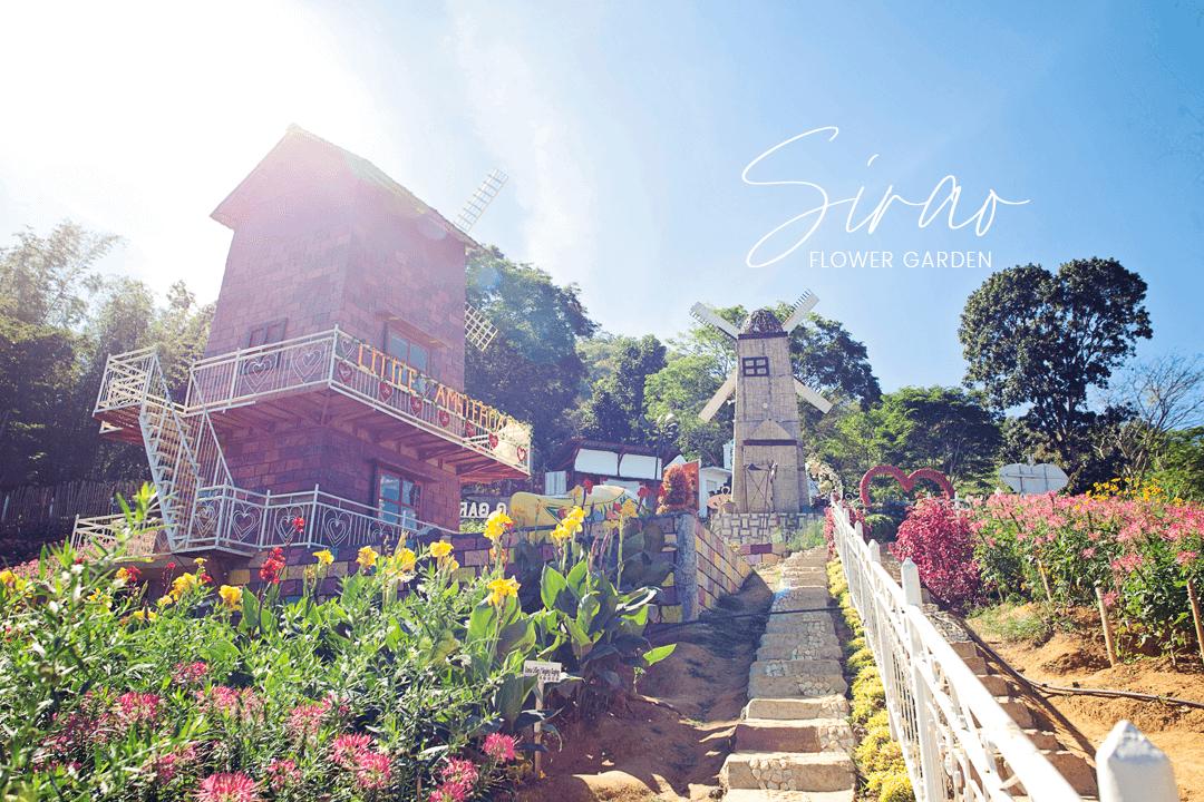 Sirao Flower Garden The Little Amsterdam of Cebu City