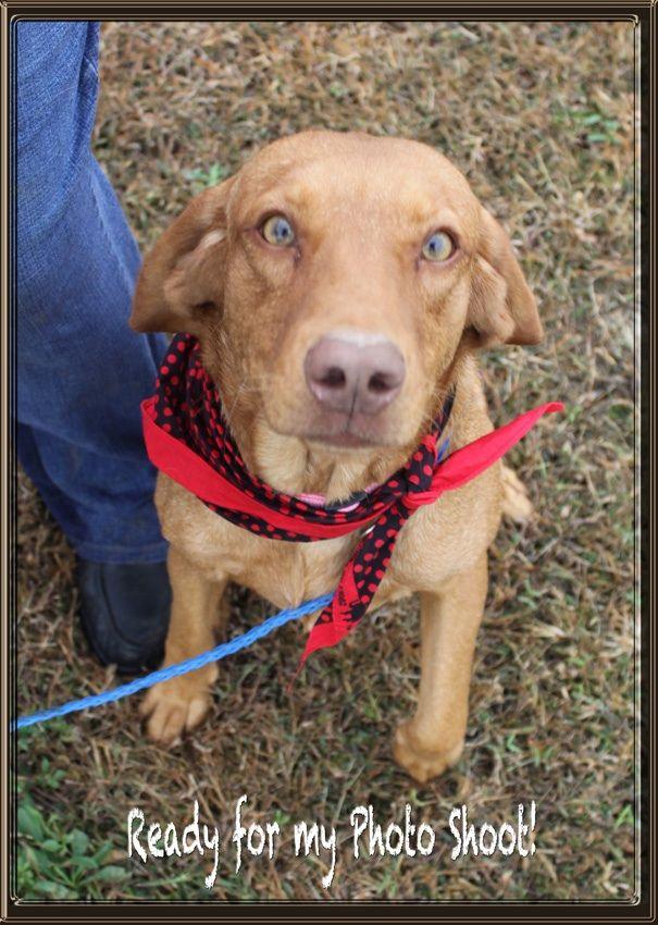 Adopt Roxie RG on Dogs, Animals, Adoption