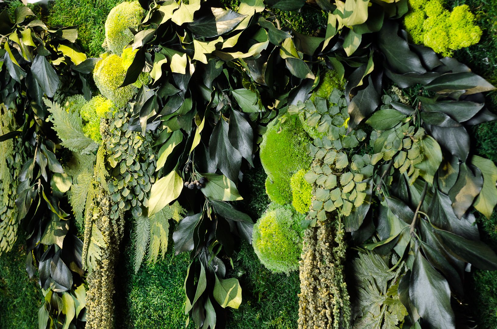 Pareti Verdi Verticali Costi mossdesigns by moss trend - stabilized plants. the green