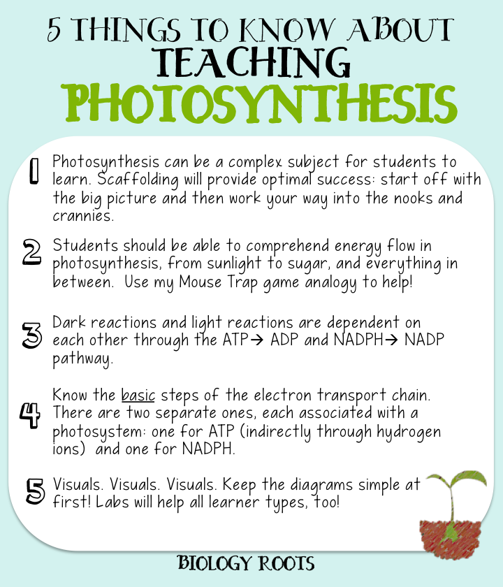 teaching photosythesis