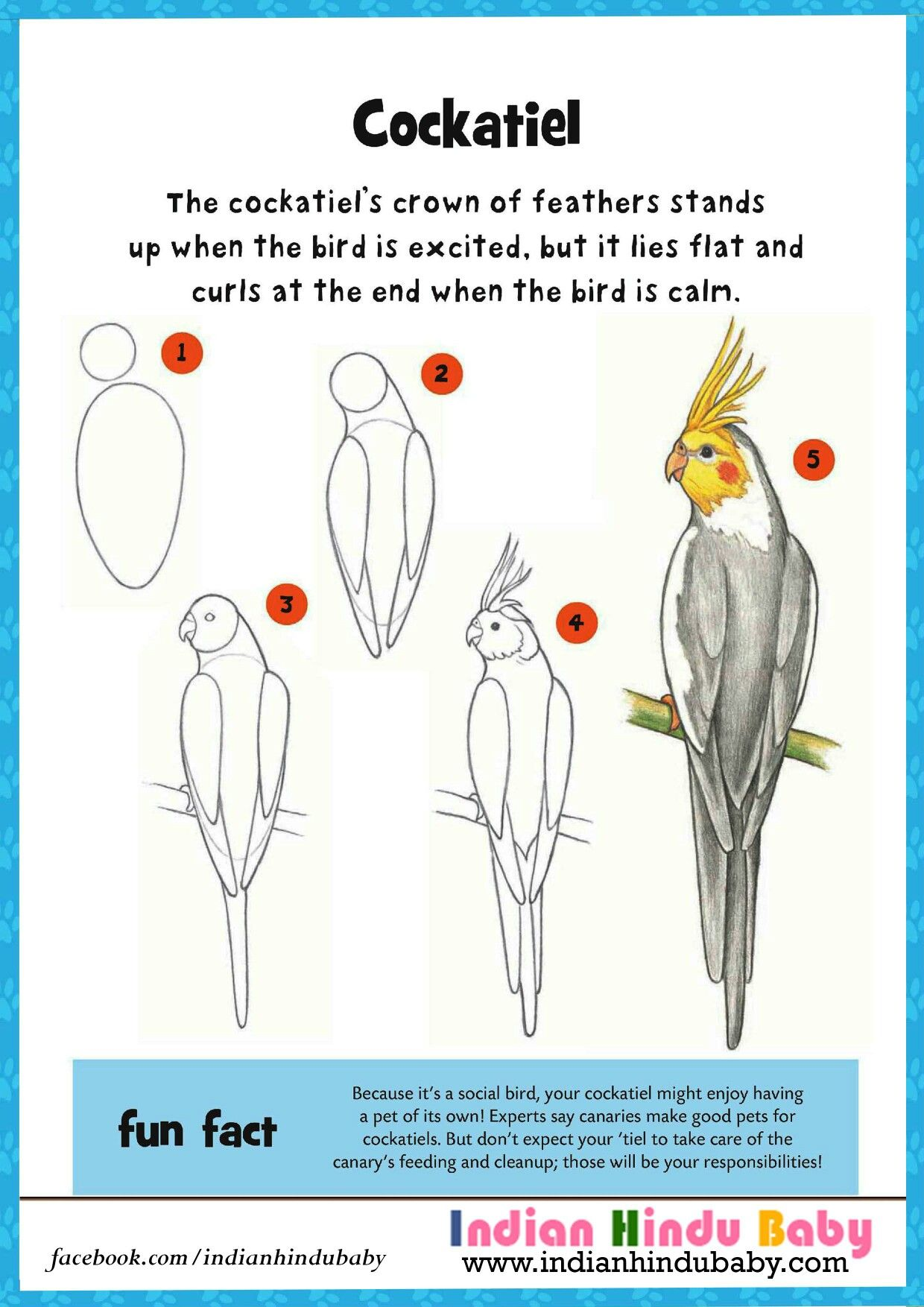 Teach your kid to draw and paint this bird named cockatiel with simple drawing tips