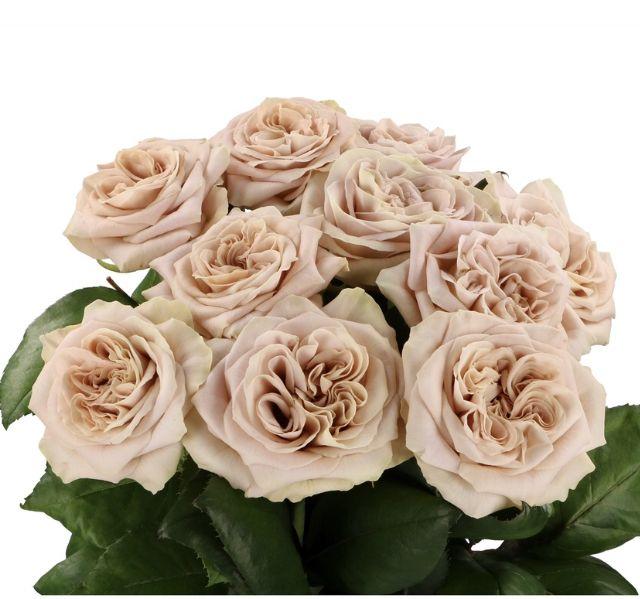 Wedding Flowers In May: Rose, May Flowers, Flowers