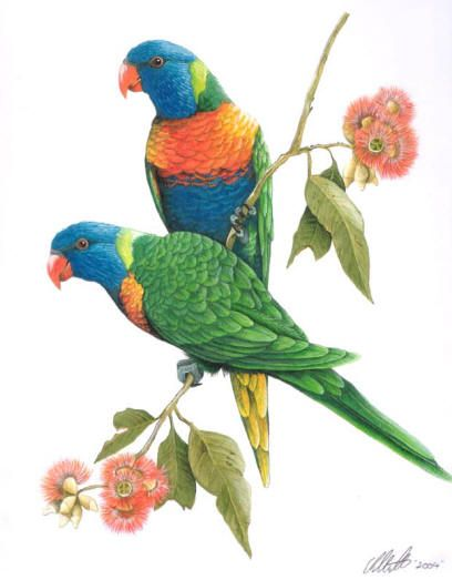 Rainbow Lorikeets Bird Drawings Parrot Painting Birds Painting