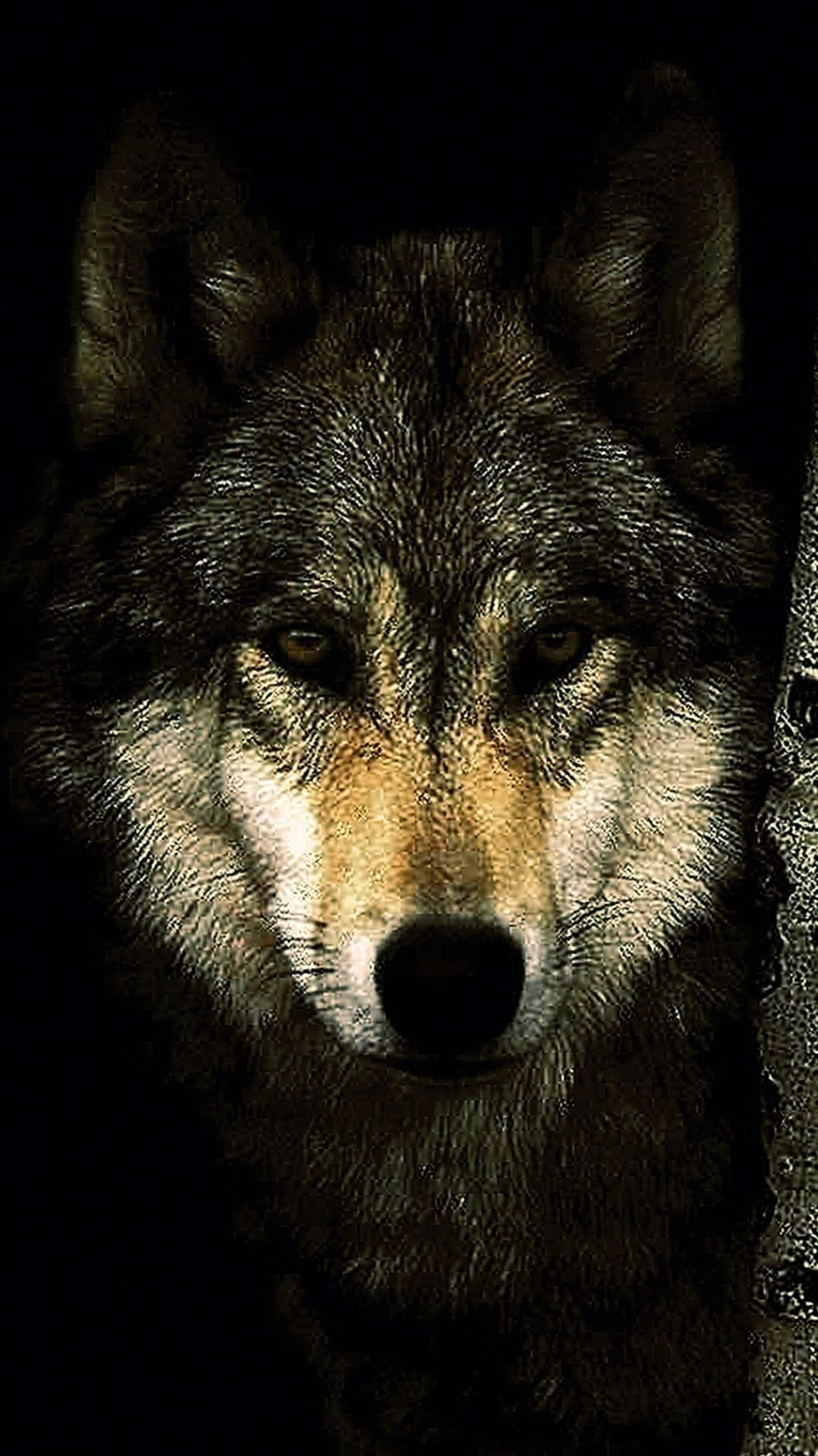 Black Wolf Wallpapers For Mobile Black Wolf Wallpapers For Mobile Iphone Wallpaper Wolf Wolf Wallpaper Black Wolf