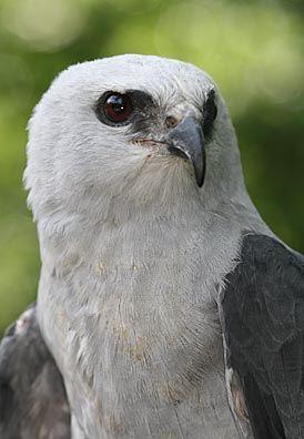 Pin By Cassandra Quiner On Birds Of Prey Birds Of Prey Pet Birds Beautiful Birds