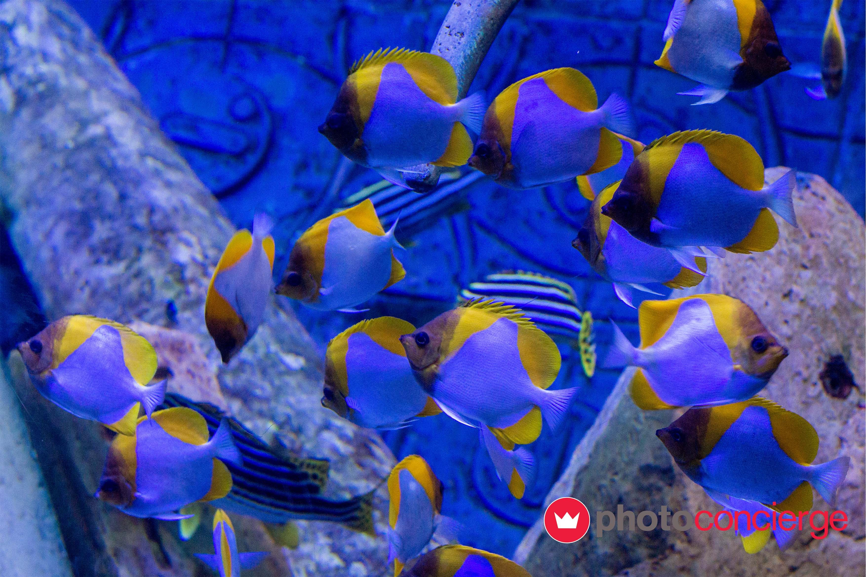 #sea wonders !!  #photoconcierge #photography #stockphoto #marine #sealife #fishes
