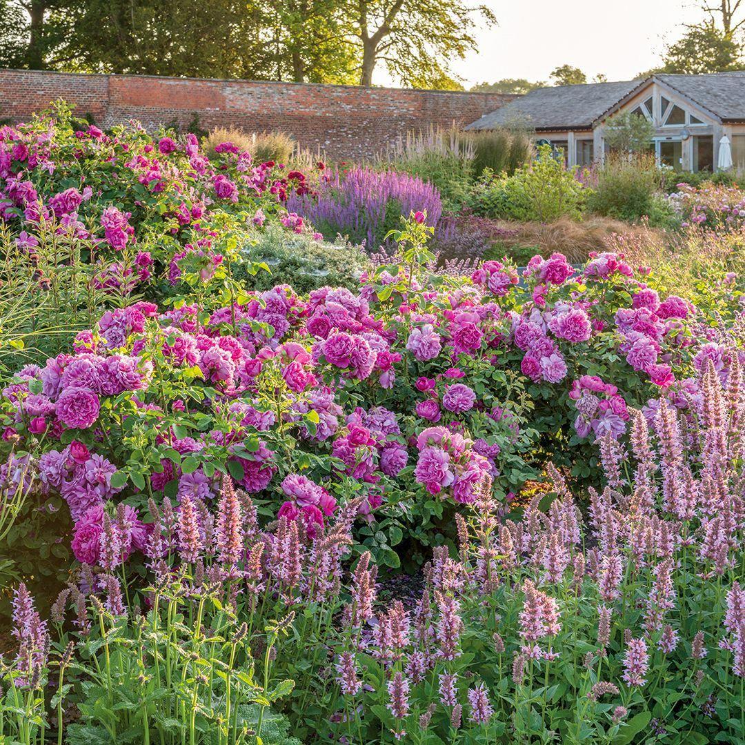 Garden Shrubs With Flowers #Vegetablegardenideas